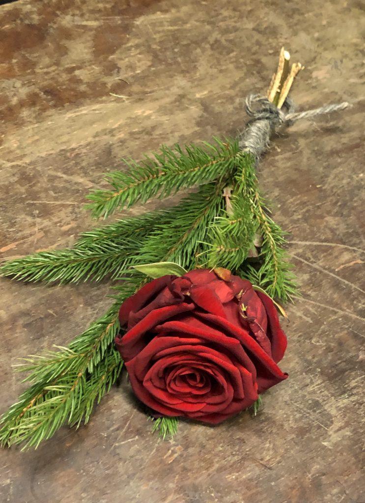 En röd ros med kvistar av gran.