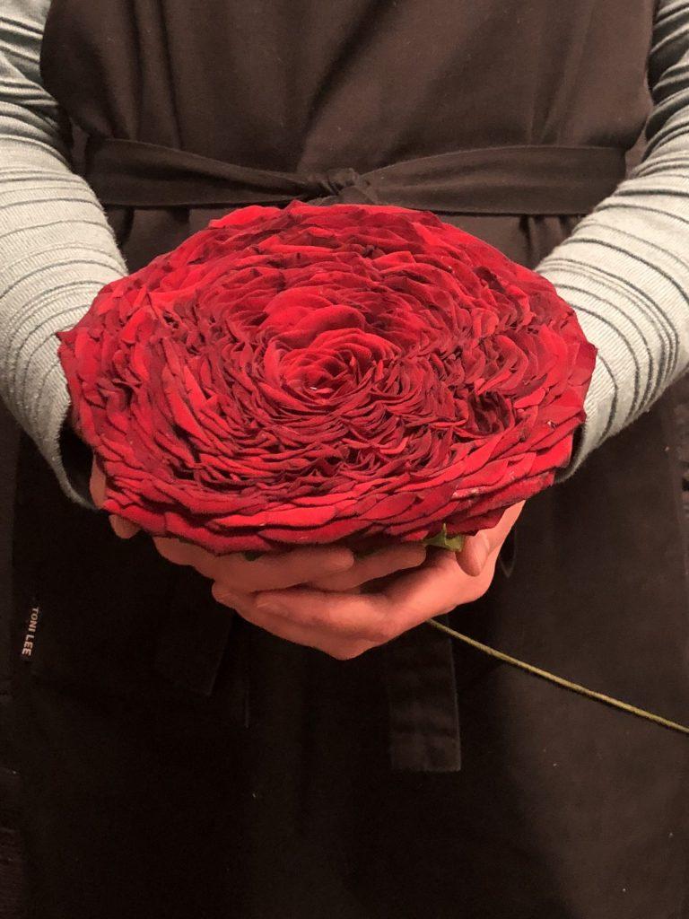 En stor röd ros.