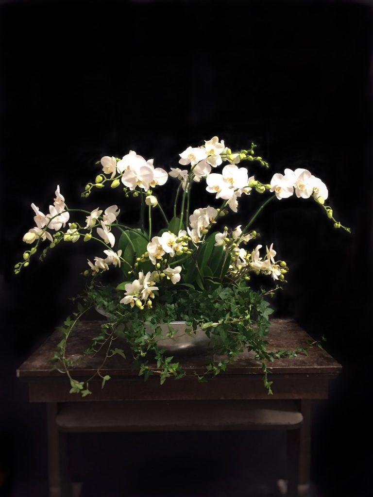 En orkidéplantering.